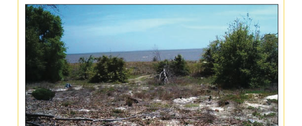 Absolute | 9 Parcels of Land | Ocean Springs, Mississippi