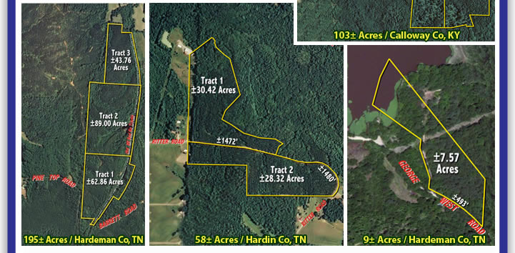 West TN/KY Land Auction, Great Timber